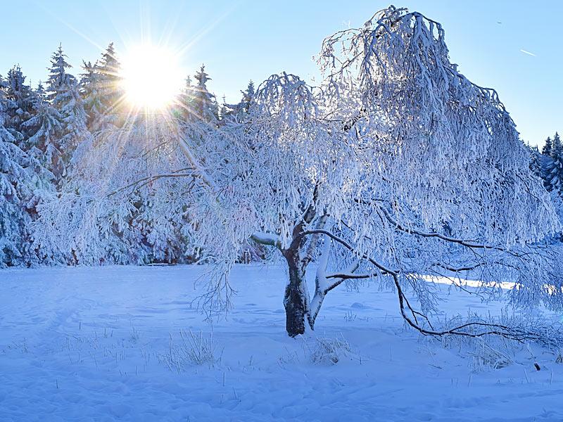 bild_winter12